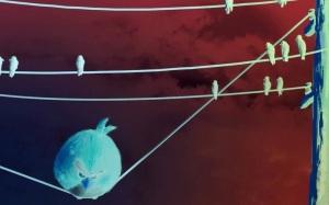 bird on wire - Copy