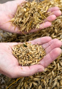 3269089-487550-separating-the-wheat-from-the-chaff