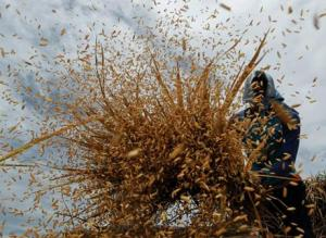 Photo credit: http://www.ifre.com/high-yield-slump-to-separate-wheat-from-the-chaff/1606702.article
